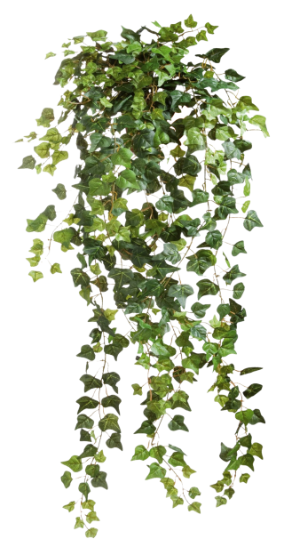 Ivy Vines Clear Cut Png PNG images