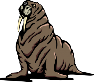 Big Black-skinned Walrus Skin Layers Photo PNG images