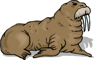 Walrus With A Mustache Drawn Images PNG images