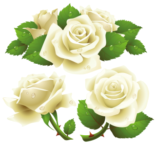 Flower Rose Garden Roses Rose Family Png PNG images