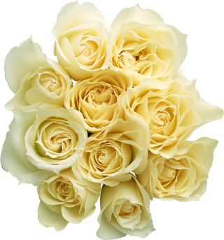 Garden Roses Cut Flowers Bouquet Yellow Rose Family PNG PNG images