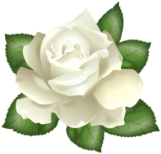 White Flower Petal Green PNG PNG images