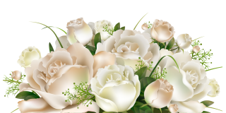 White Rose, Flower Rose, Flower Bouquet, Flower PNG images