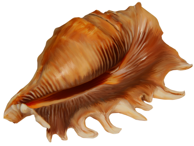 Brown Pointy Conch Image image #48532