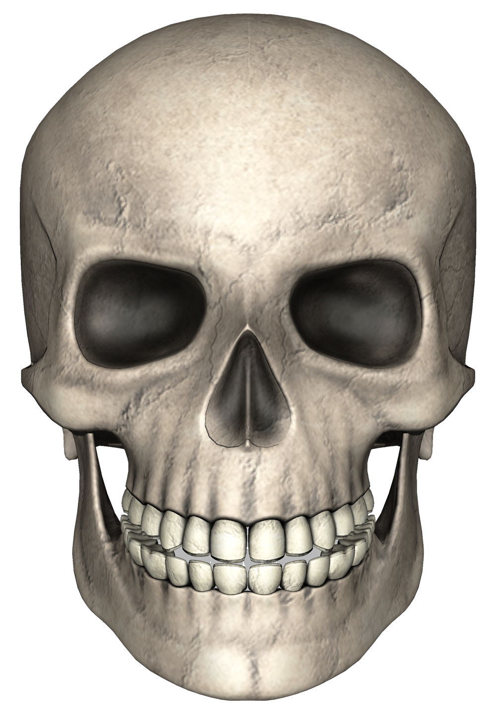 Gray Painted Skull Photo image #47876