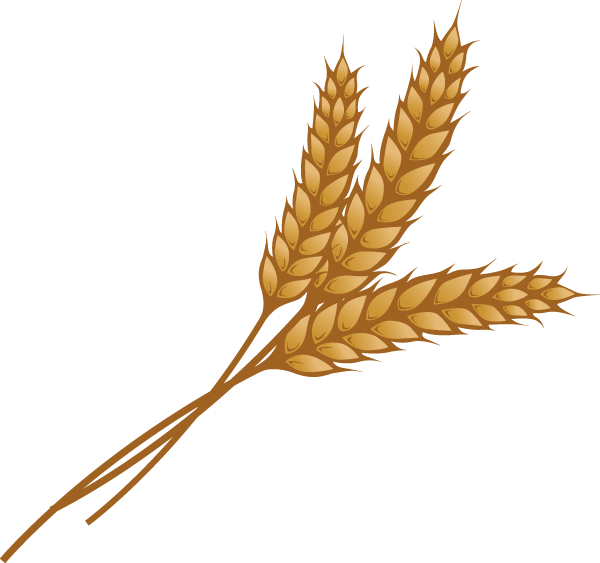 Images of Yellow Wheat