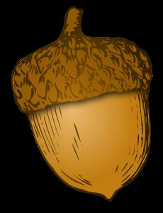 Acorn Png image #37320