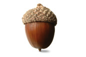 Free Download Of Acorn Icon Clipart