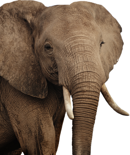 African Elephant Png image #43233