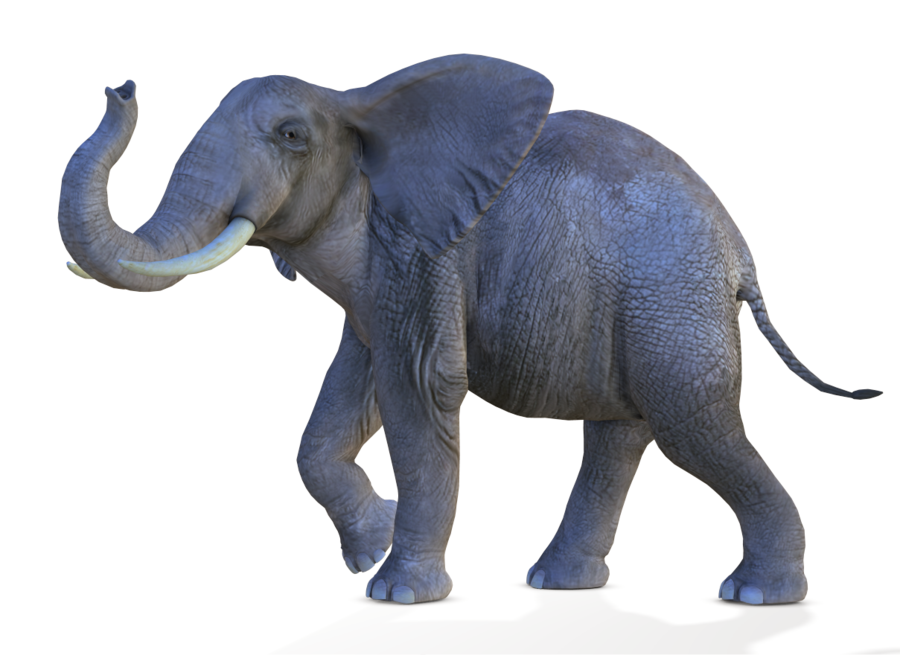 African Elephant Png Transparent image #43248