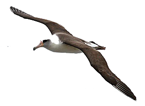 Albatross Flying From The Top Images image #47762