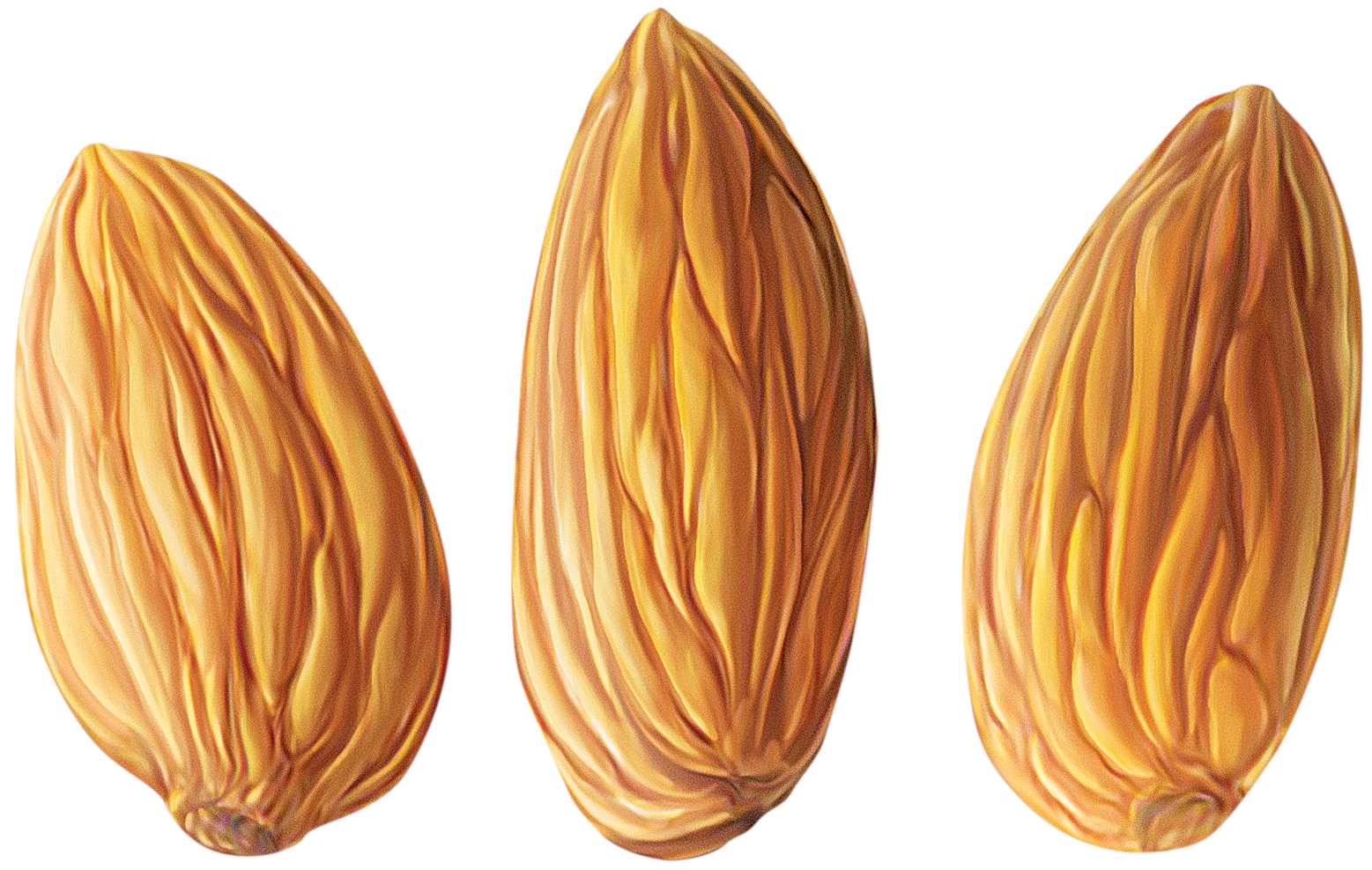 almond png clipart
