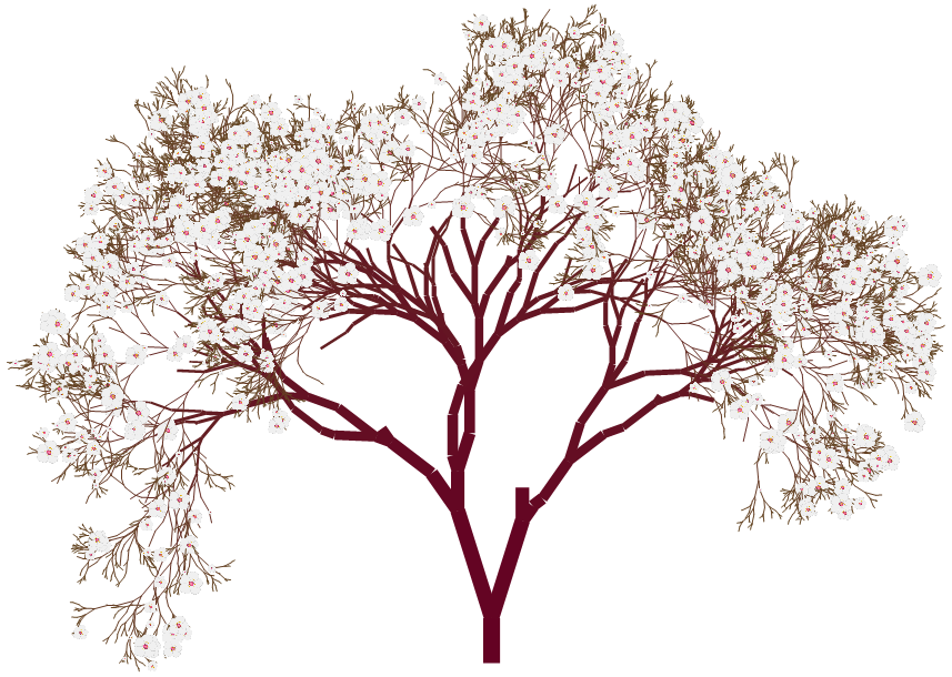 almond tree png