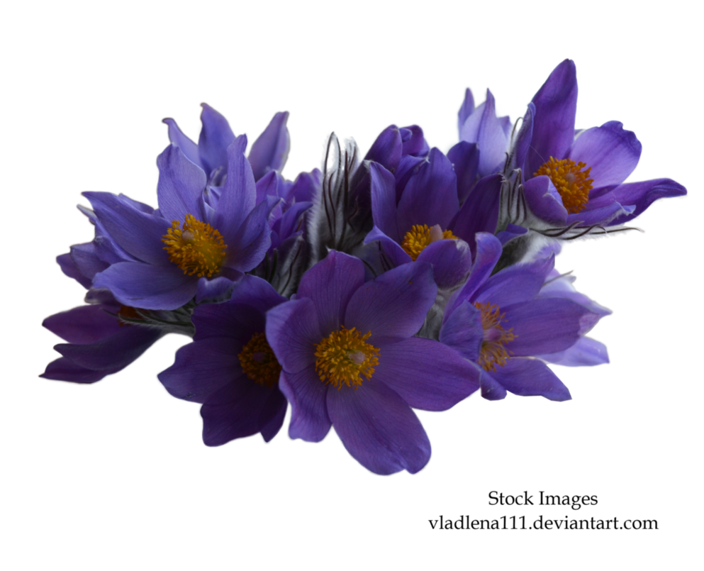 Spring Flowers Transparent Png Pictures Free Icons And Png Backgrounds
