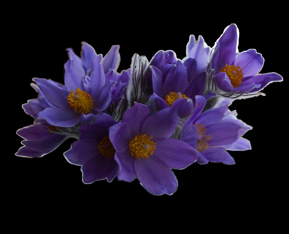 Amazing Spring flowers image