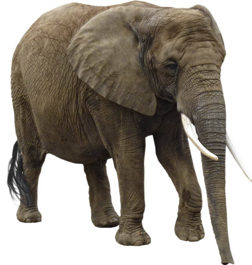 Animal Elephant Image image #43219