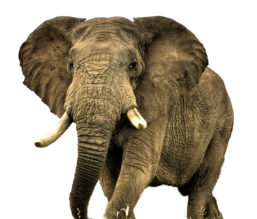 Animal Elephant photo