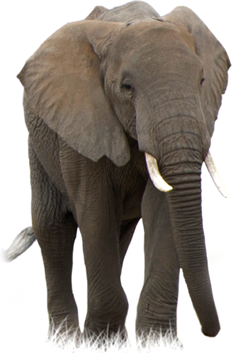 Animal Elephant picture image