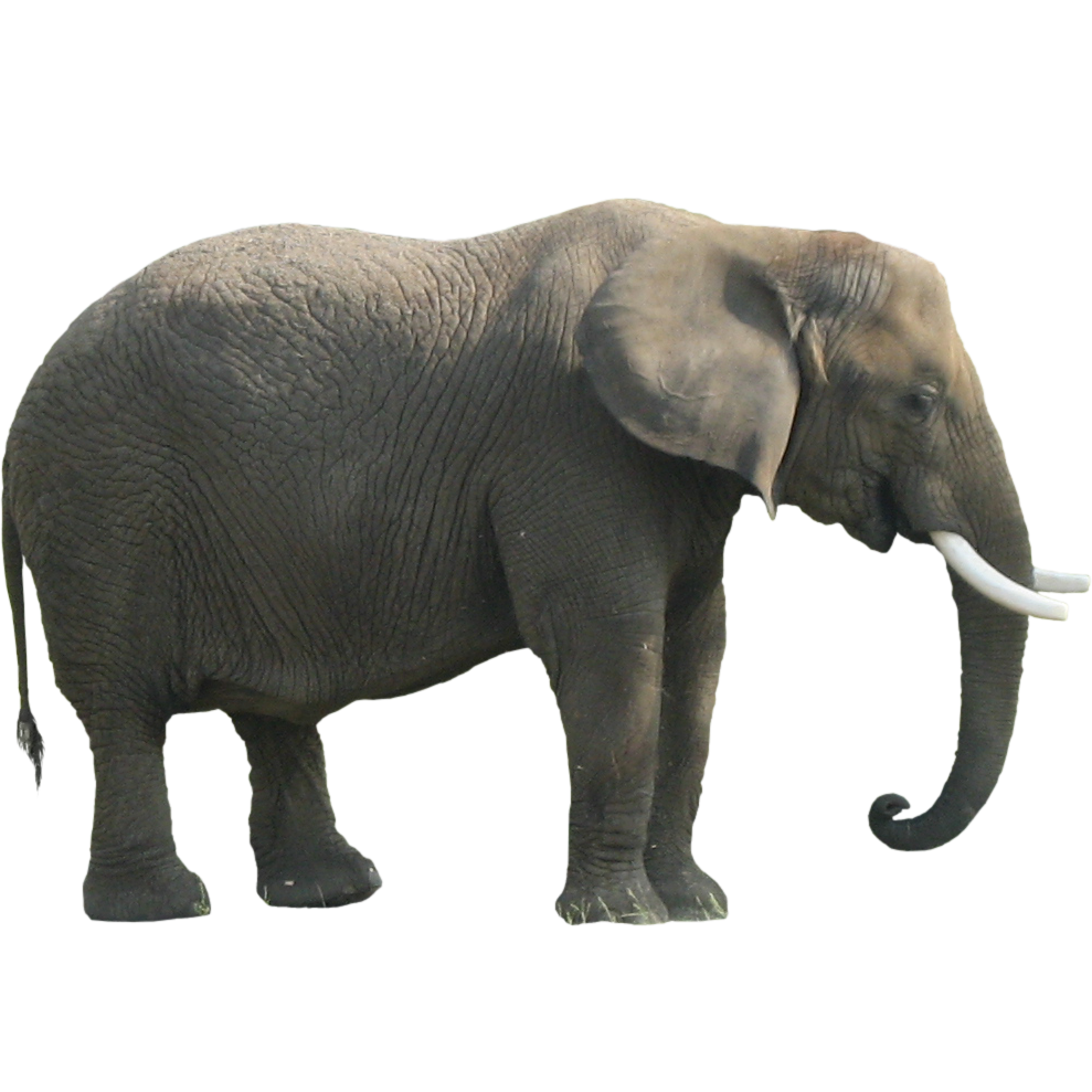 Animal Elephant Png Transparent Background Free Download 43220 Freeiconspng Download icons in all formats or edit them for your designs. animal elephant png transparent