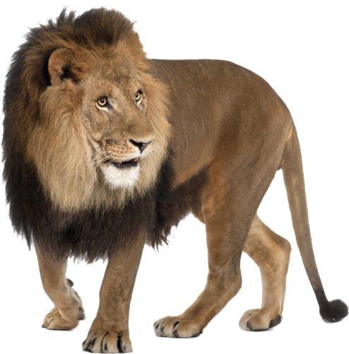 animal lion png