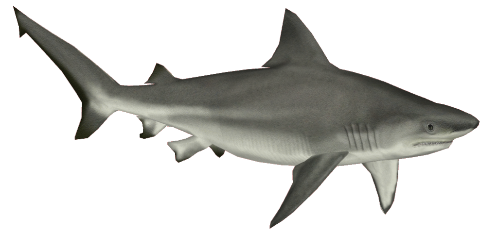 Download And Use Shark Png Clipart image #42746