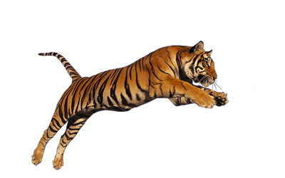 Png Download Tiger High-quality image #39188