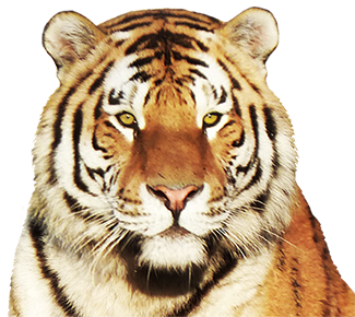 animal tiger png