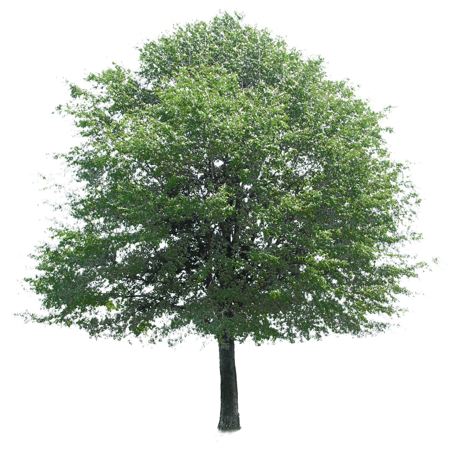 Free Download Of Tree Icon Clipart