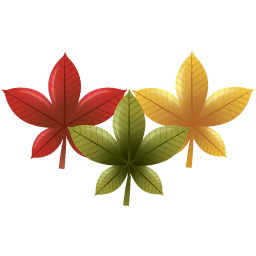 autumn, leaves, chinese, red maple leaf
