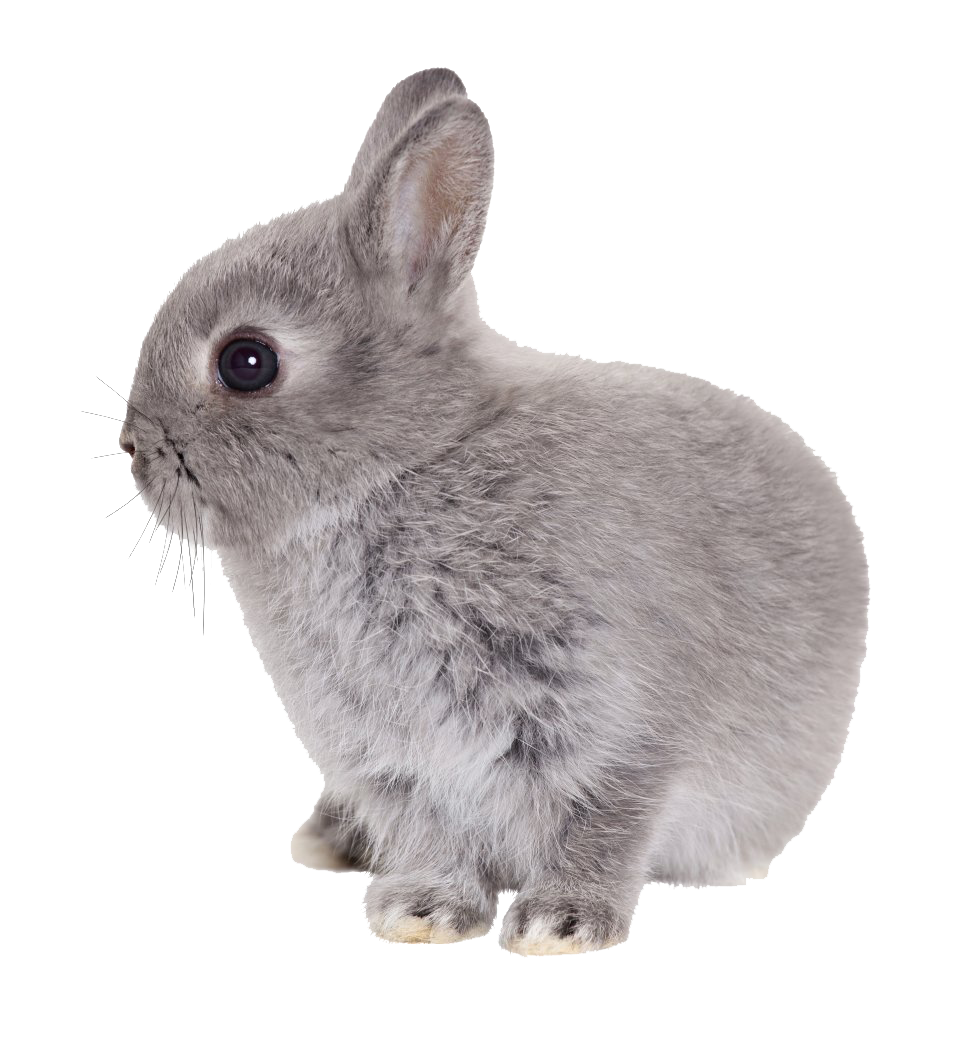 Babby Rabbit Png image #40317