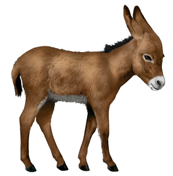 Baby Donkey Download High-quality Png image #47510