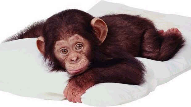 Baby Monkey Png image #26171