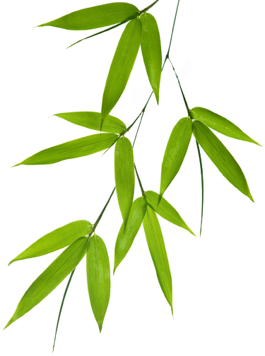 Bamboo Leaf Png image #40472
