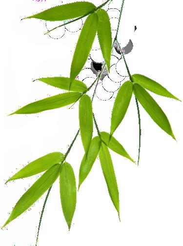 Bamboo Leaf Png image #40472