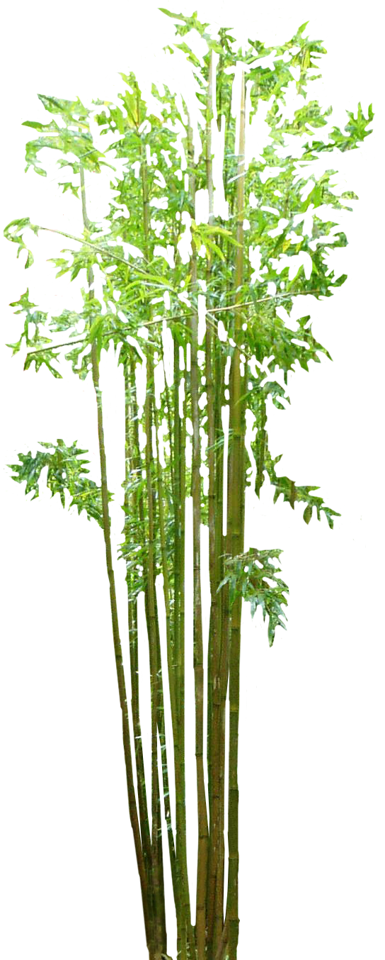 Bamboo Png image #40461
