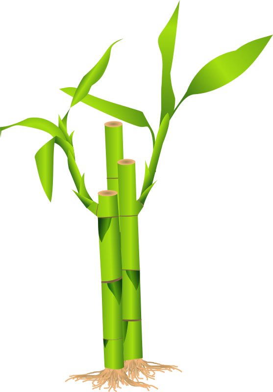 Bamboo Png image #40471