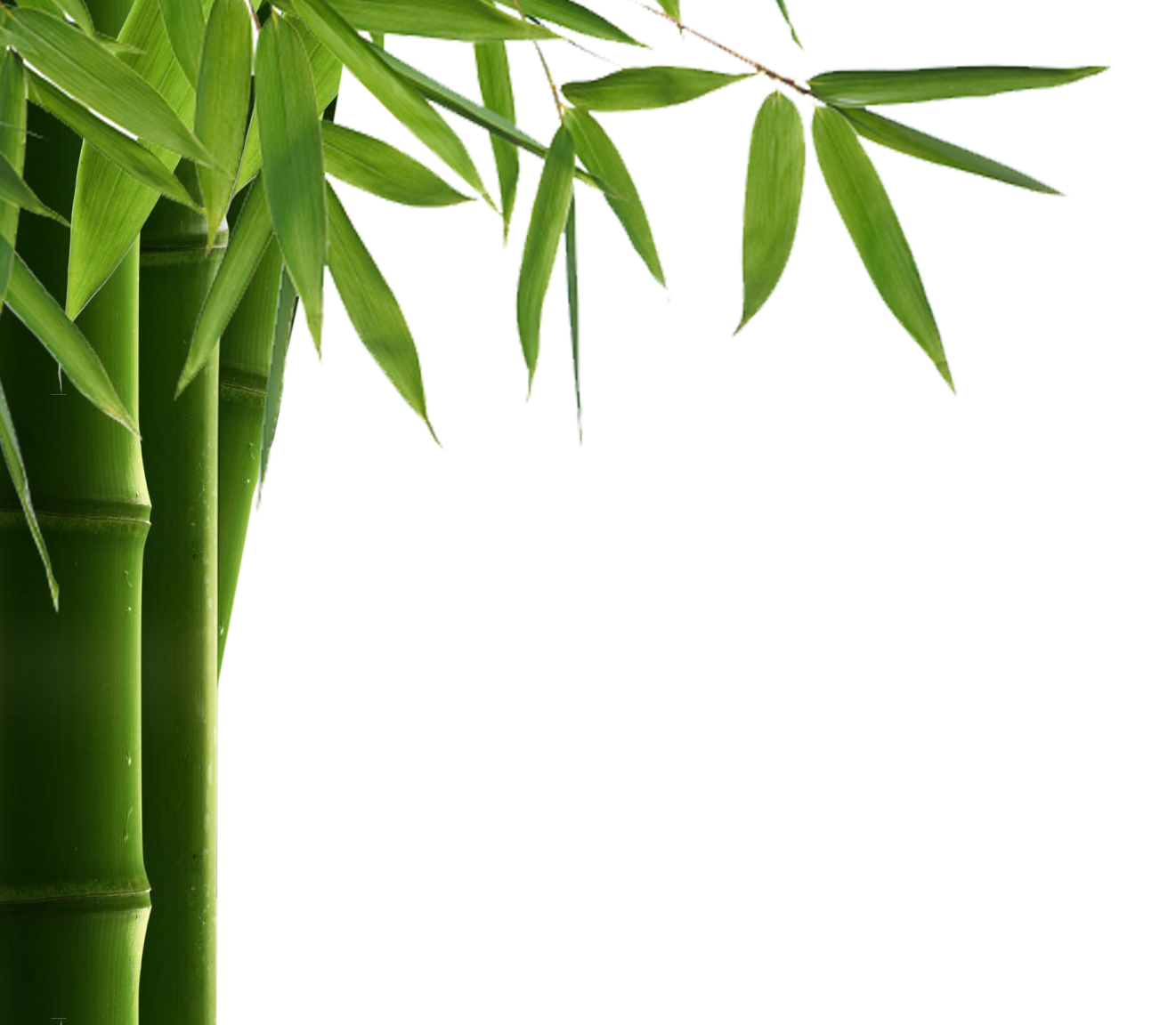 Download For Free Bamboo Png In High Resolution image #40473