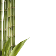 Bamboo Png Collection Clipart image #40478