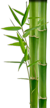 Free Download Images Bamboo image #40485