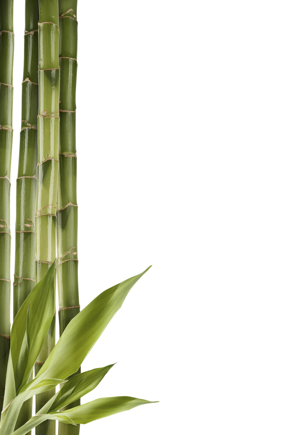 Bamboo Png image #40463