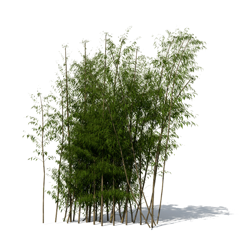 Bamboo Png image #40465