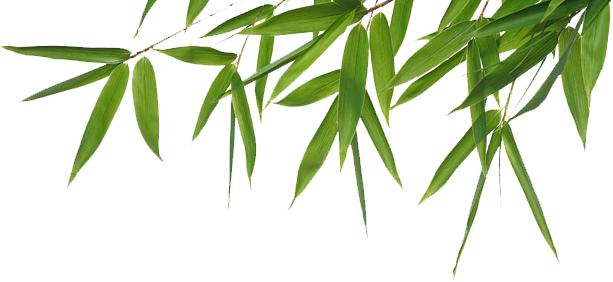 Clipart Bamboo Png Best