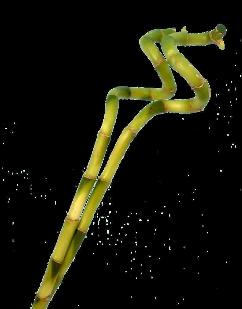 Bamboo Png image #40468
