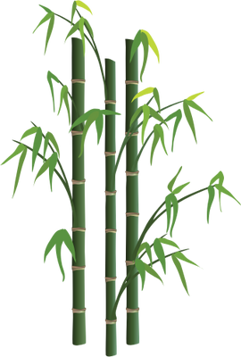 Bamboo Tree Png image #40476