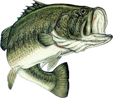 Bass Fishing Png image #41471