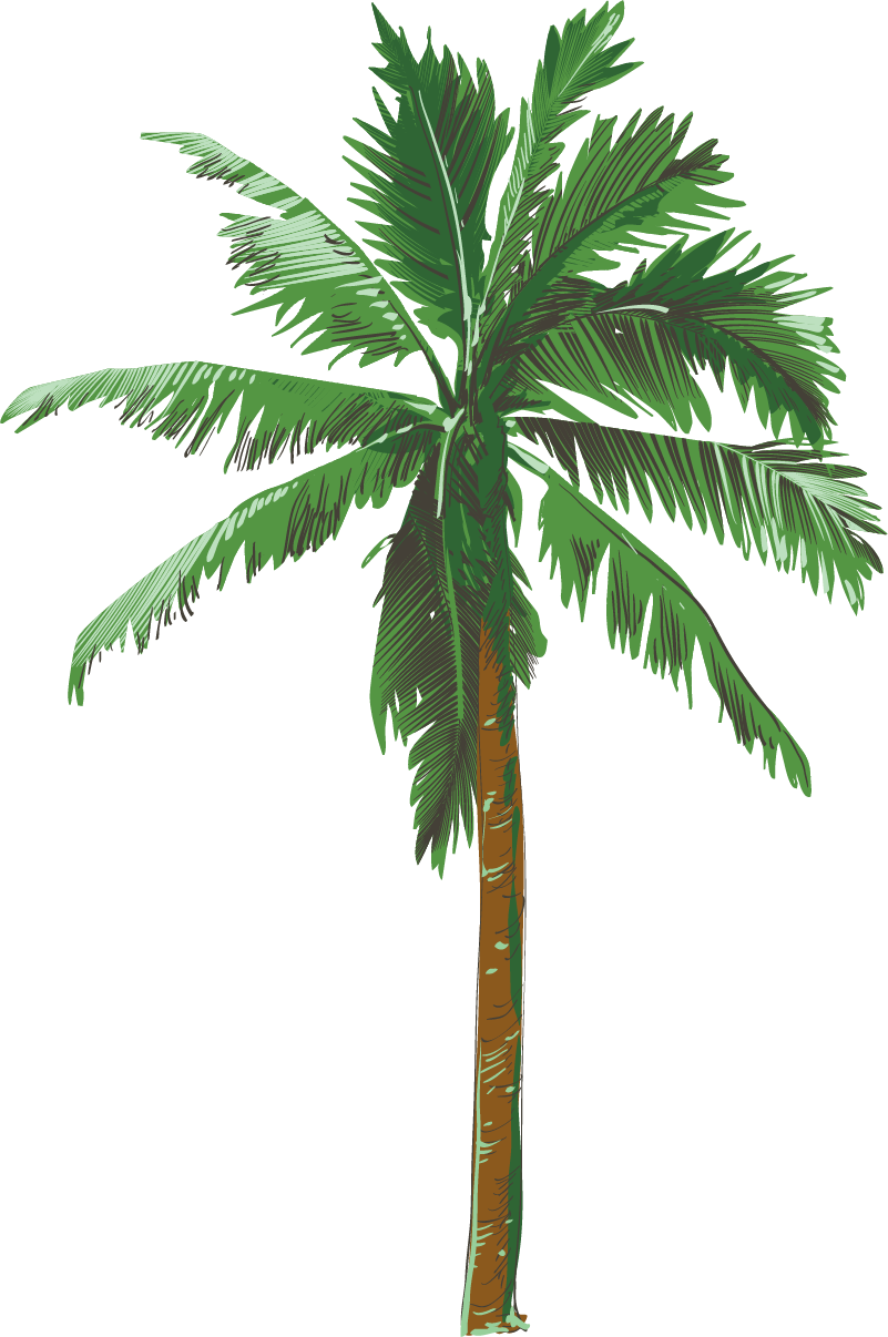 Beautiful palm tree png clipart image