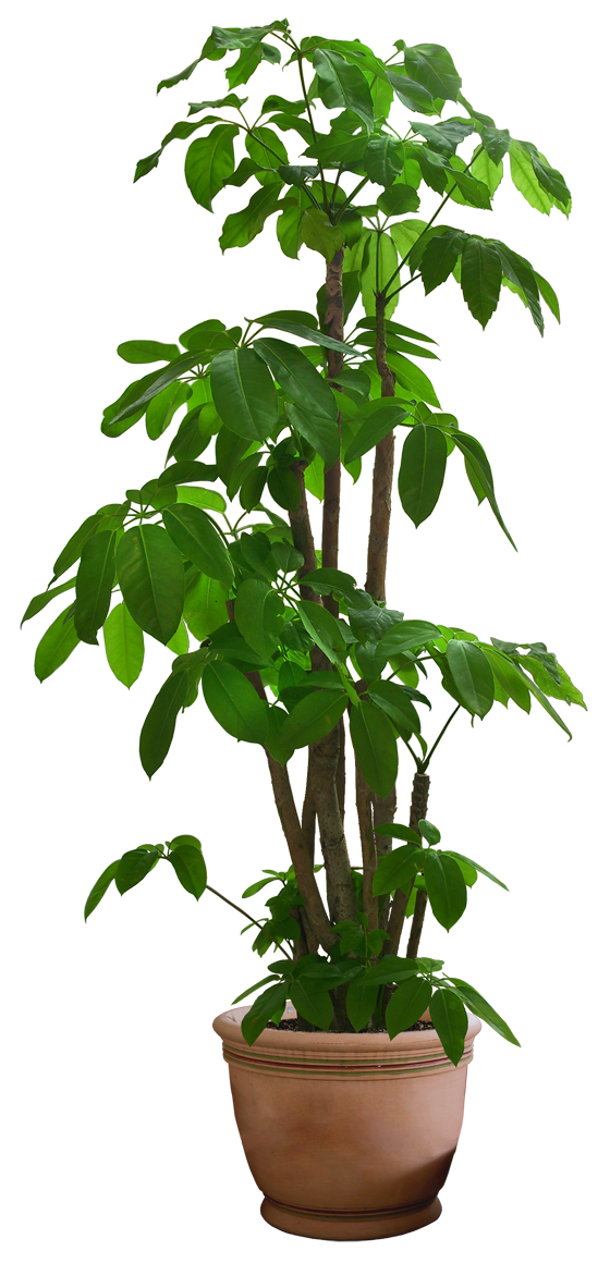 Beautiful Transparent Plants Png image #44906