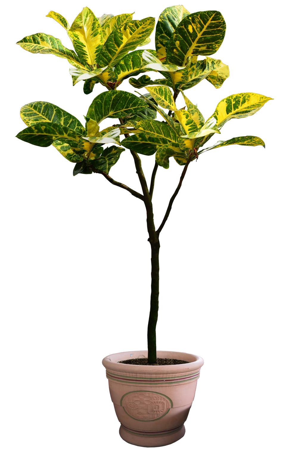beautiful transparent plants, potted flower png