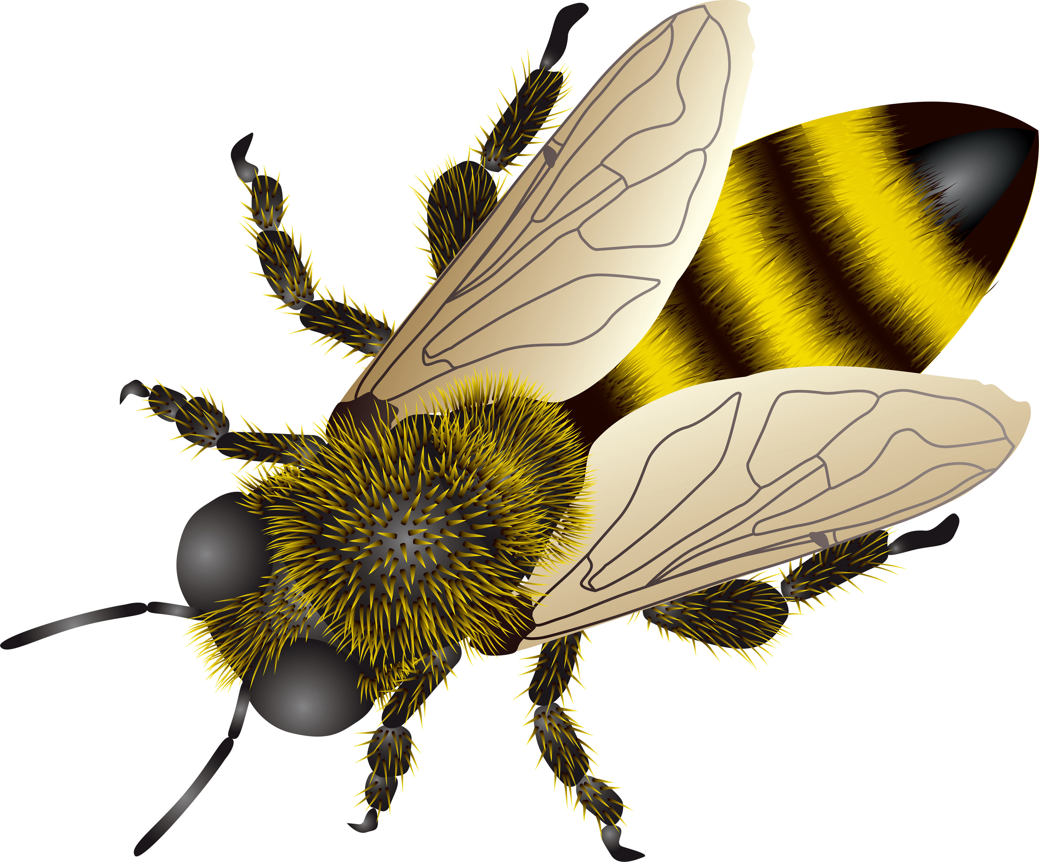 Bee Background Transparent image #45408