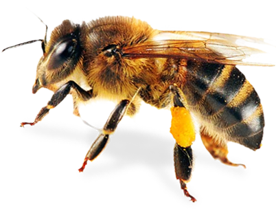 Bee Image PNG Transparent image #45411